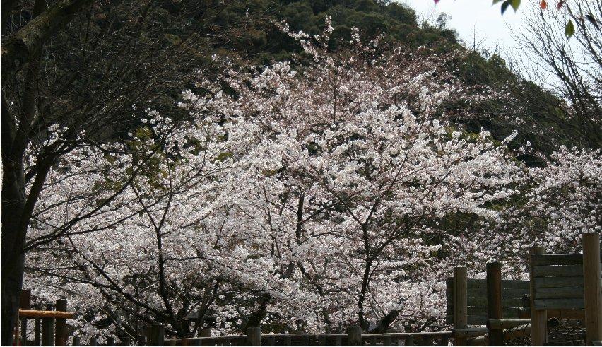 Gifu10